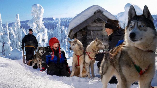 laponia-finlandesa-huskys-